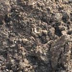 Mushroom Soil